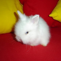 Photo de profil de Winnie