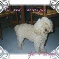 Photo de profil de Vaness