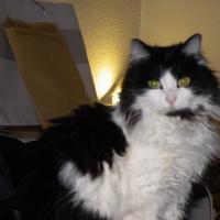 Photo de profil de Crevette