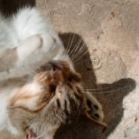 Photo de profil de Canaillou