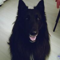 Photo de profil de Shoopa