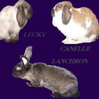 Photo de profil de Lanchron