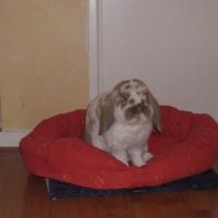 Photo de profil de Bouly