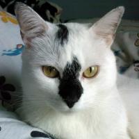 Photo de profil de Kiwi