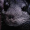Photo de Stitch