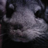 Photo de profil de Stitch