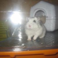 Photo de profil de Mamzellescarlette