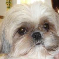 Photo de profil de Bijou