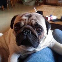 Photo de profil de Puggy