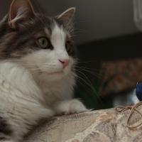 Photo de profil de Baguera
