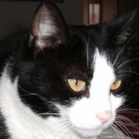 Photo de profil de Juliette