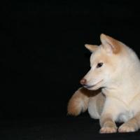Photo de profil de Dagan
