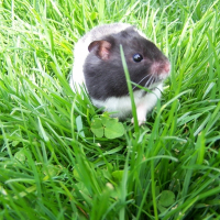 Photo de profil de Wall-e