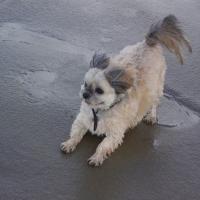 Photo de profil de Choupette