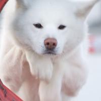 Photo de profil de Tsubaki
