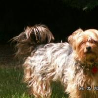 Photo de profil de Scully