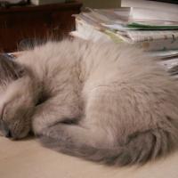 Photo de profil de Pastis