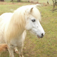Photo de profil de Babette