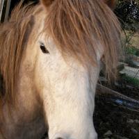 Photo de profil de Pakito