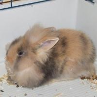 Photo de profil de Choco