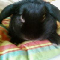 Photo de profil de Bob
