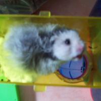 Photo de profil de Ernest