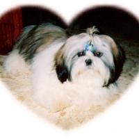 Photo de profil de Zenzy