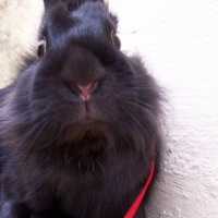 Photo de profil de Pouki