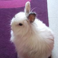 Photo de profil de Poupette