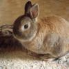 Photo de Bunny