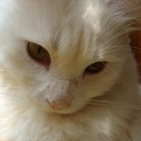 Photo de profil de Barnaby
