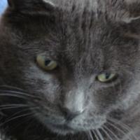 Photo de profil de Choupy
