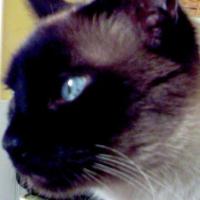 Photo de profil de Winston