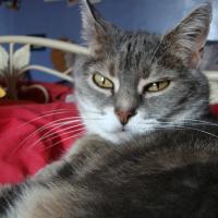 Photo de profil de Typet