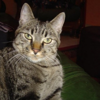 Photo de profil de Tarrot