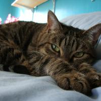 Photo de profil de Kitou