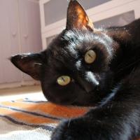 Photo de profil de Lulune