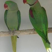 Photo de profil de Titou et paki