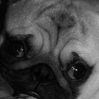 Photo de profil de Nachos