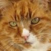 Photo de Louie ananda bliss-cat fur-face fish-breath
