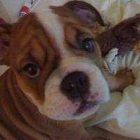 Photo de profil de Baguatelle