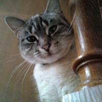 Photo de profil de Suki