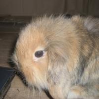 Photo de profil de Noisette
