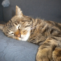 Photo de profil de Tigrou