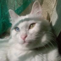 Photo de profil de Blanche