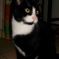 Photo de profil de Pralinou