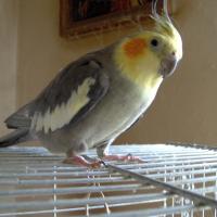 Photo de profil de Tippy