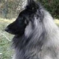 Photo de profil de Chaman
