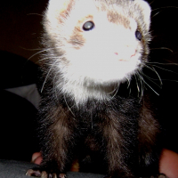Photo de profil de Trunks