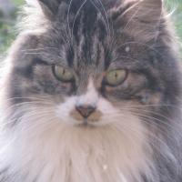Photo de profil de Prisca